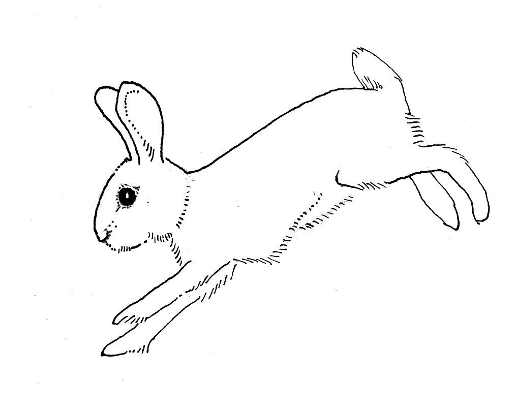 Rabbit Outline Running Rabbit Drawing Outline Painting Drawing
