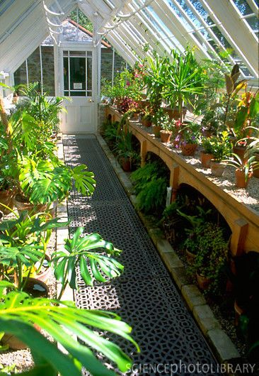 this greenhouse interior! | Gardening | Greenhouse interiors ... on green lavender, green gardening, green butternut squash, green beets, green bonsai, green tulips, green nature, green shrubs, green bushes, green perennial, green garden design, green flowers,