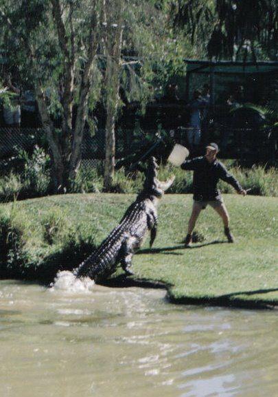 6838db96b1820c Nile Crocodile Attacks On Humans