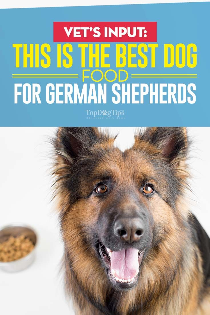 Vet Recommended Dog Food For German Shepherds Dog Food Recipes