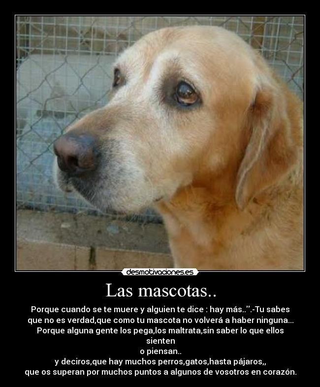 Cuánto Te Echo De Menos Perros Frases Animales Perros