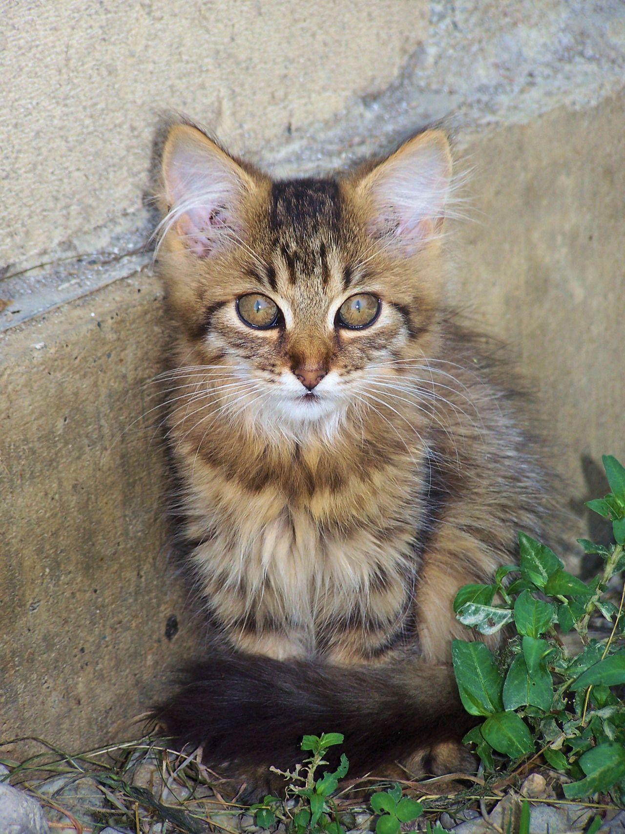 looks like my precious ) Kittens cutest, Cute little