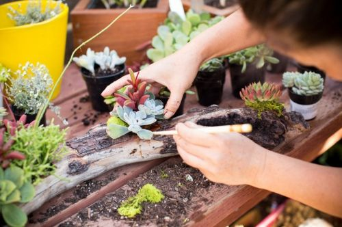 Treibholz Selber Machen schöne dekoration aus treibholz selber machen gartenbau sukkulenten