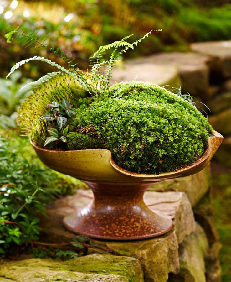 How To Make a Moss Dish Garden in 2020 (With images