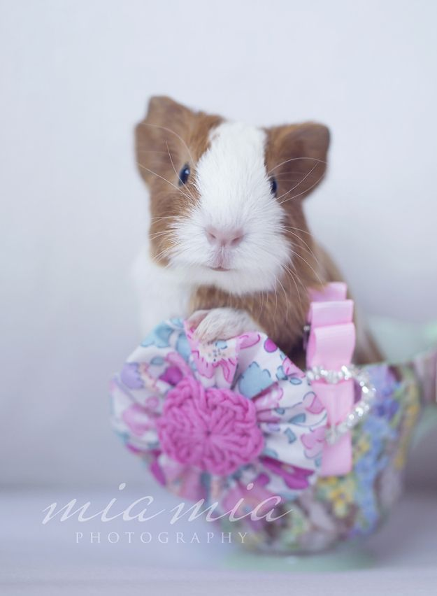 How to make a fabric yo-yo.  And a guinea pig.  ;)