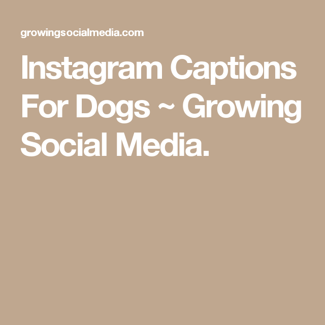 Instagram Captions For Dogs Growing Social Media Instagram Captions Boyfriend Captions For Boyfriend Pictures Instagram Captions