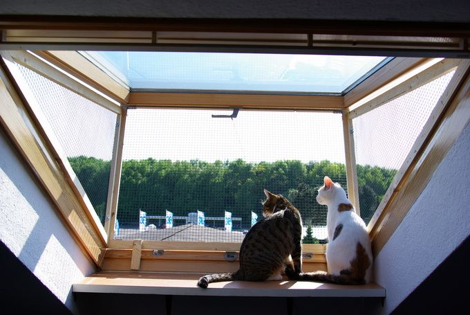 Dachfenster Katzen Losung Roof Window Cat Solution Mit Bildern