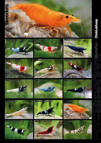 Pin by MK K on Fish | Freshwater aquarium shrimp, Tropical