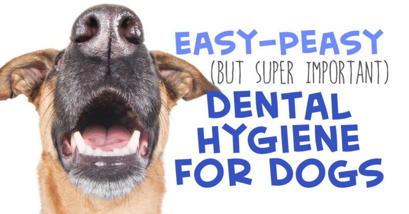 In the wild, dogs are naturally able to prevent tooth