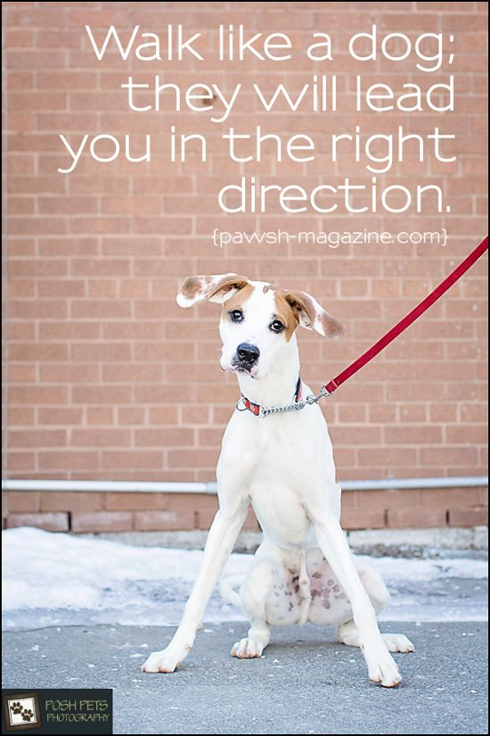 Walk Like A Dog They Will Lead You In The Right Direction
