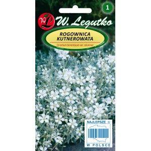 Rogownica Kutnerowata Salt Condiments Food