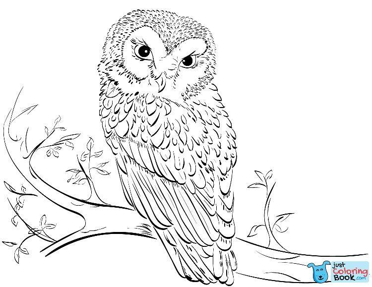 36+ Supercoloring owl info