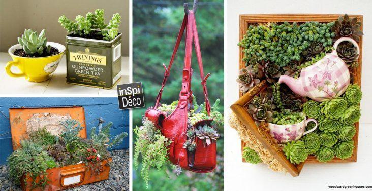 Recycler et decorer avec les plantes
