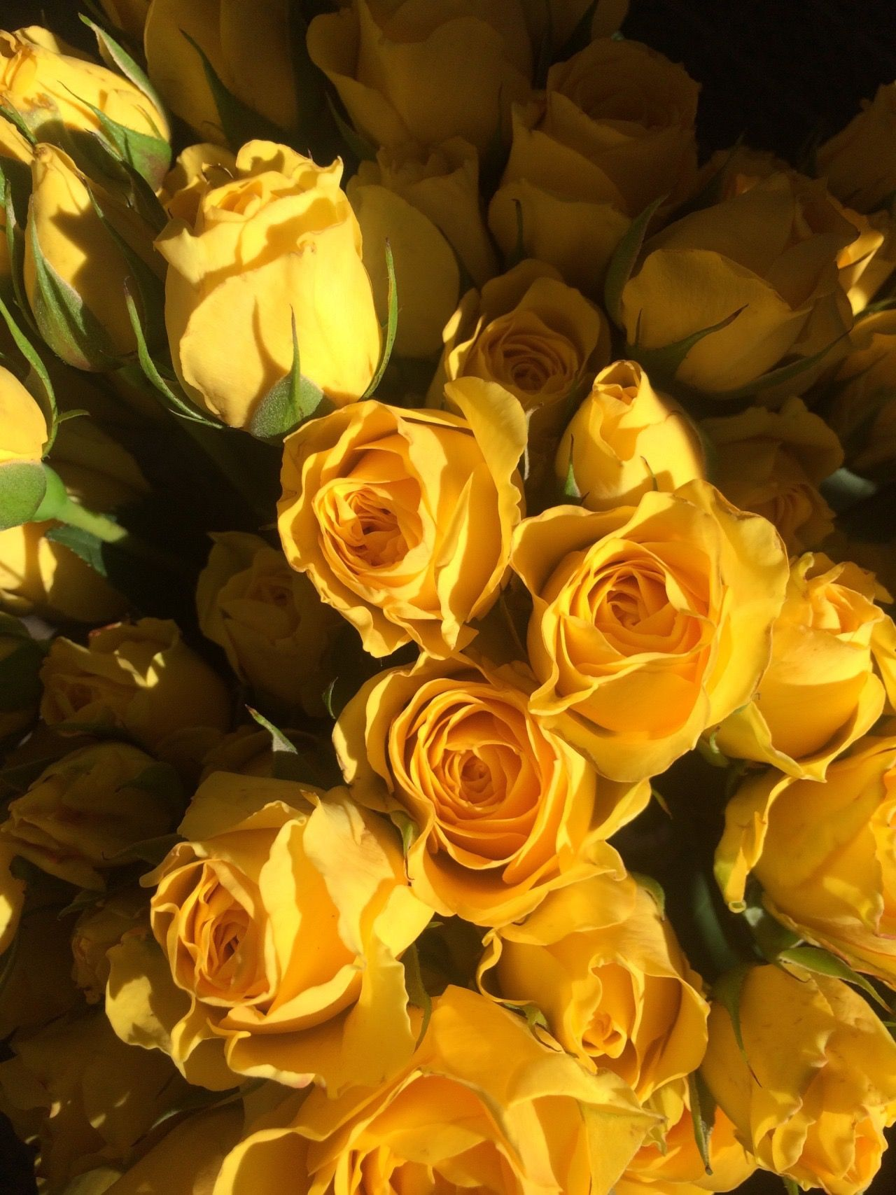 Pin by s a r a👼🏻. on flowers Yellow aesthetic, Yellow