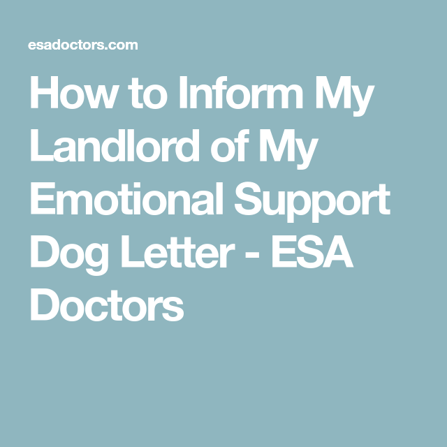 How To Inform My Landlord Of My Emotional Support Dog Letter  Esa