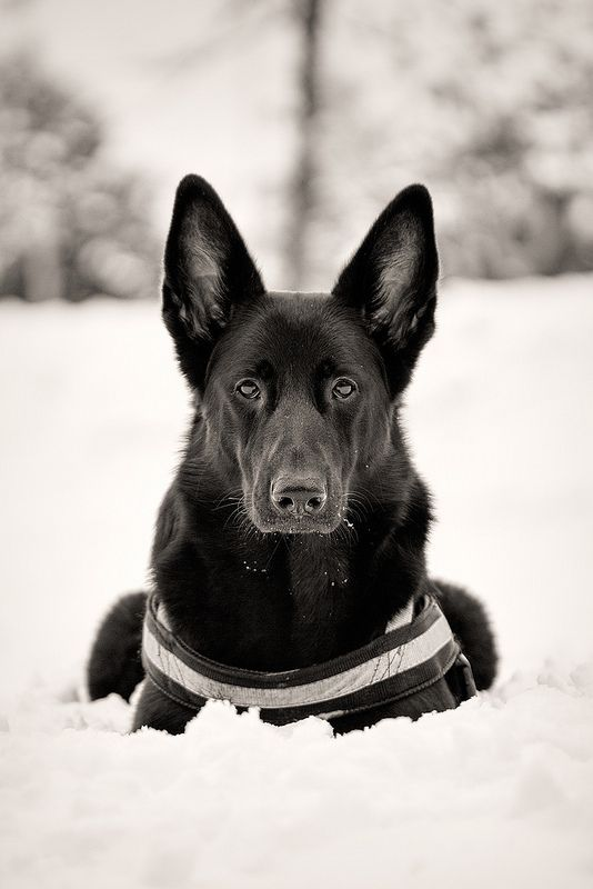 Fur Mehr Fotos Und Interessante Artikel Besuche Uns Auf Www Hund Zu
