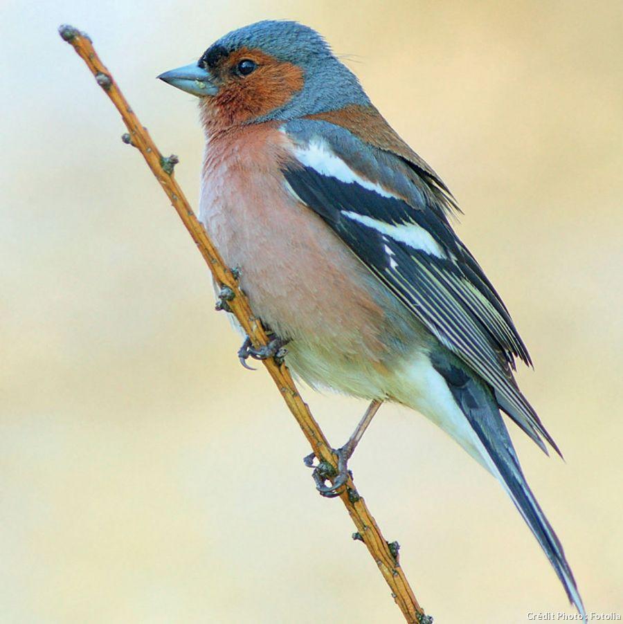 Ce que mangent les oiseaux du jardin bird beautiful for Oiseaux du jardin