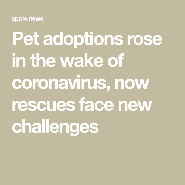 Pet adoptions rose in the wake of coronavirus, now rescues face new challenges — CNBC