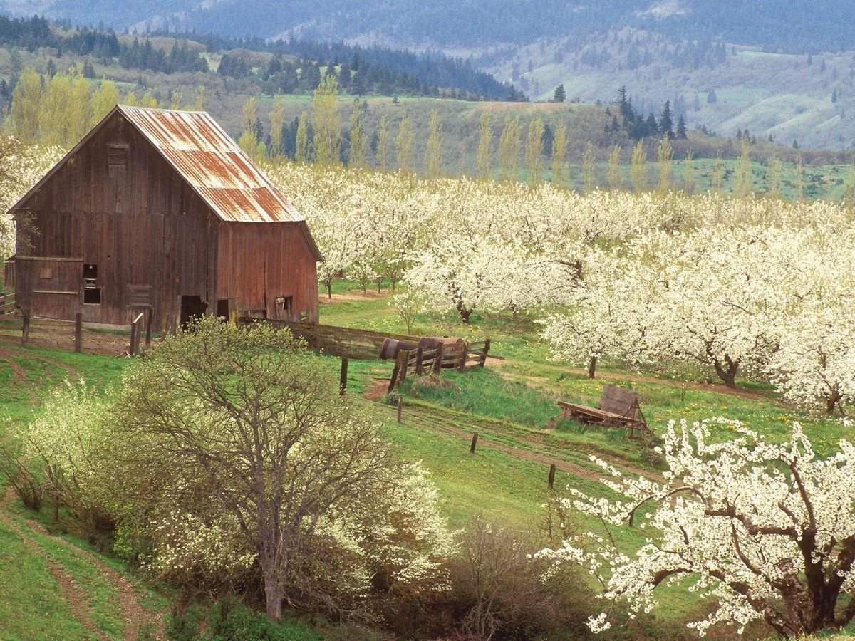 Pin by Lillian Olson on Colora Orchards Market