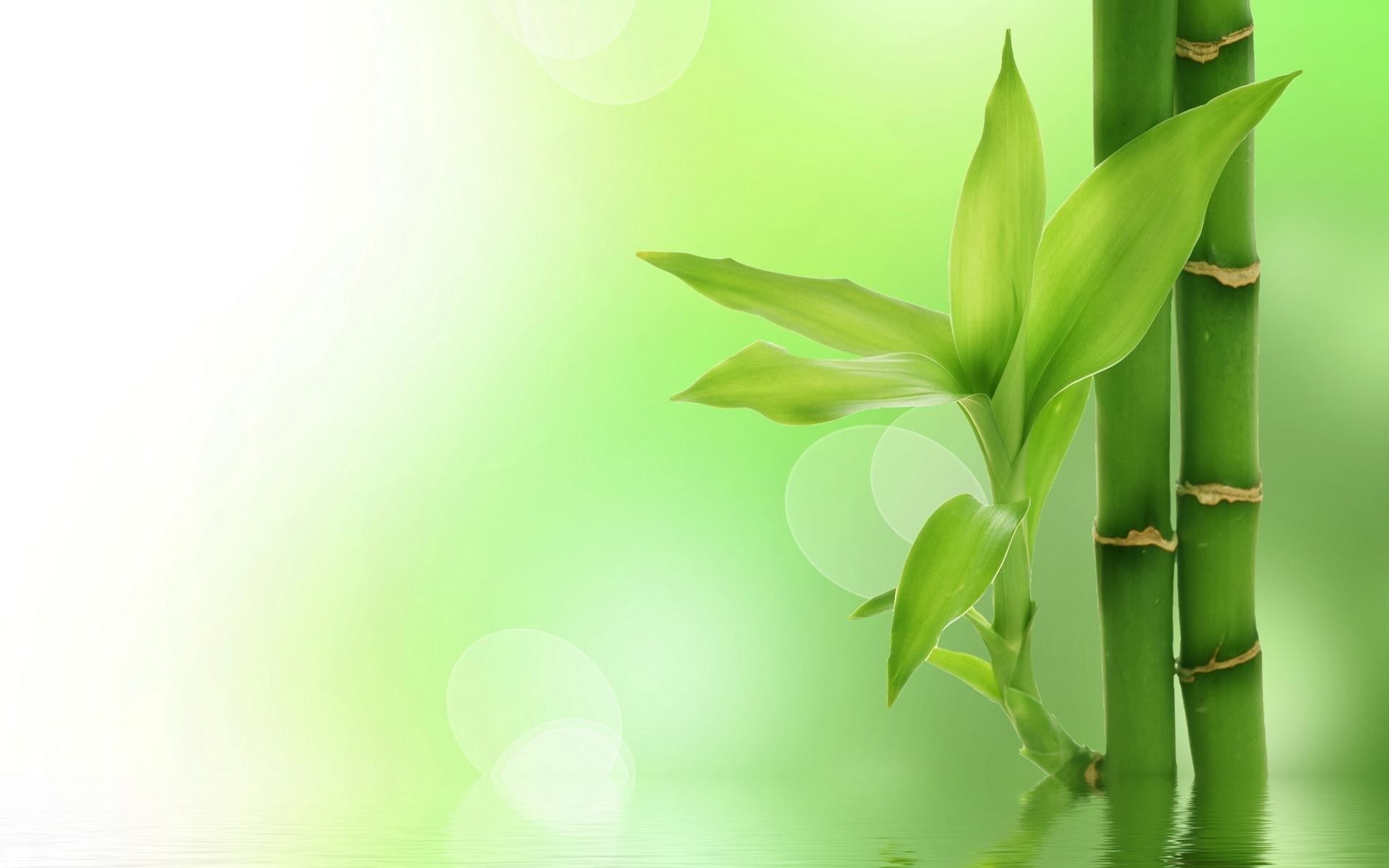 Free hd bamboo wallpapers ololoshka pinterest bamboo wallpaper