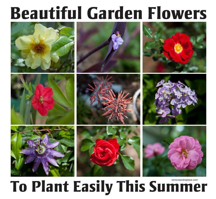 10 Types Of Beautiful Flowers To Plant In Your Garden For Summer