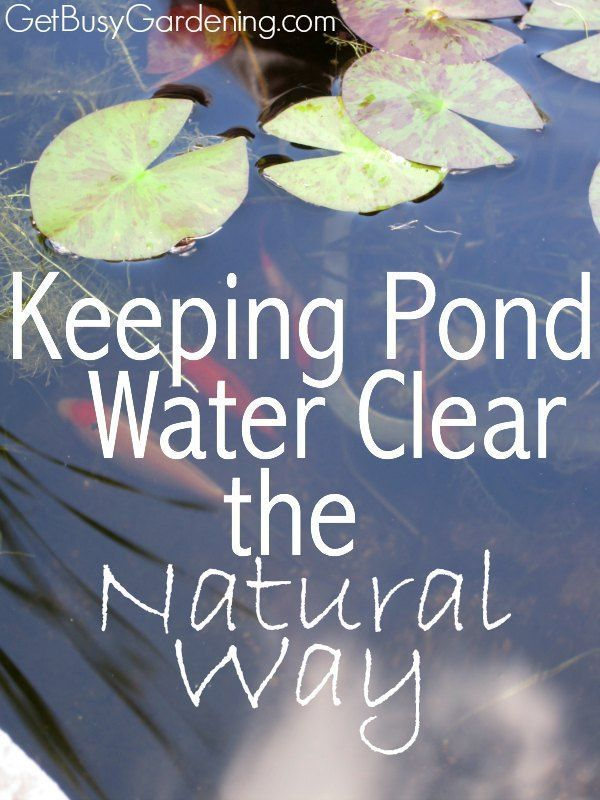 how to keep pond water clear naturally and get rid of