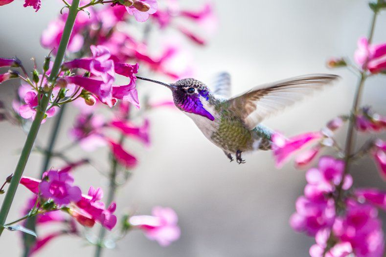 Hummingbird Plants 25+ Of The Best Flowers That Attract