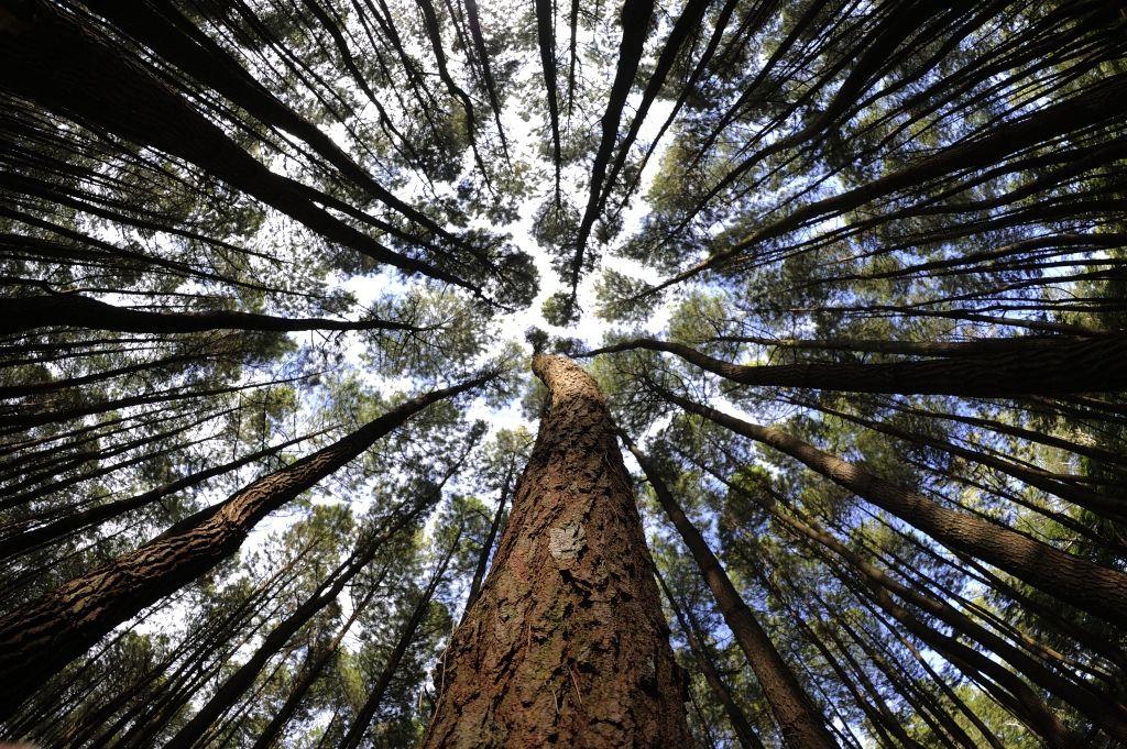 Hutan Pinus Imogiri Pemandangan Kota Gambar