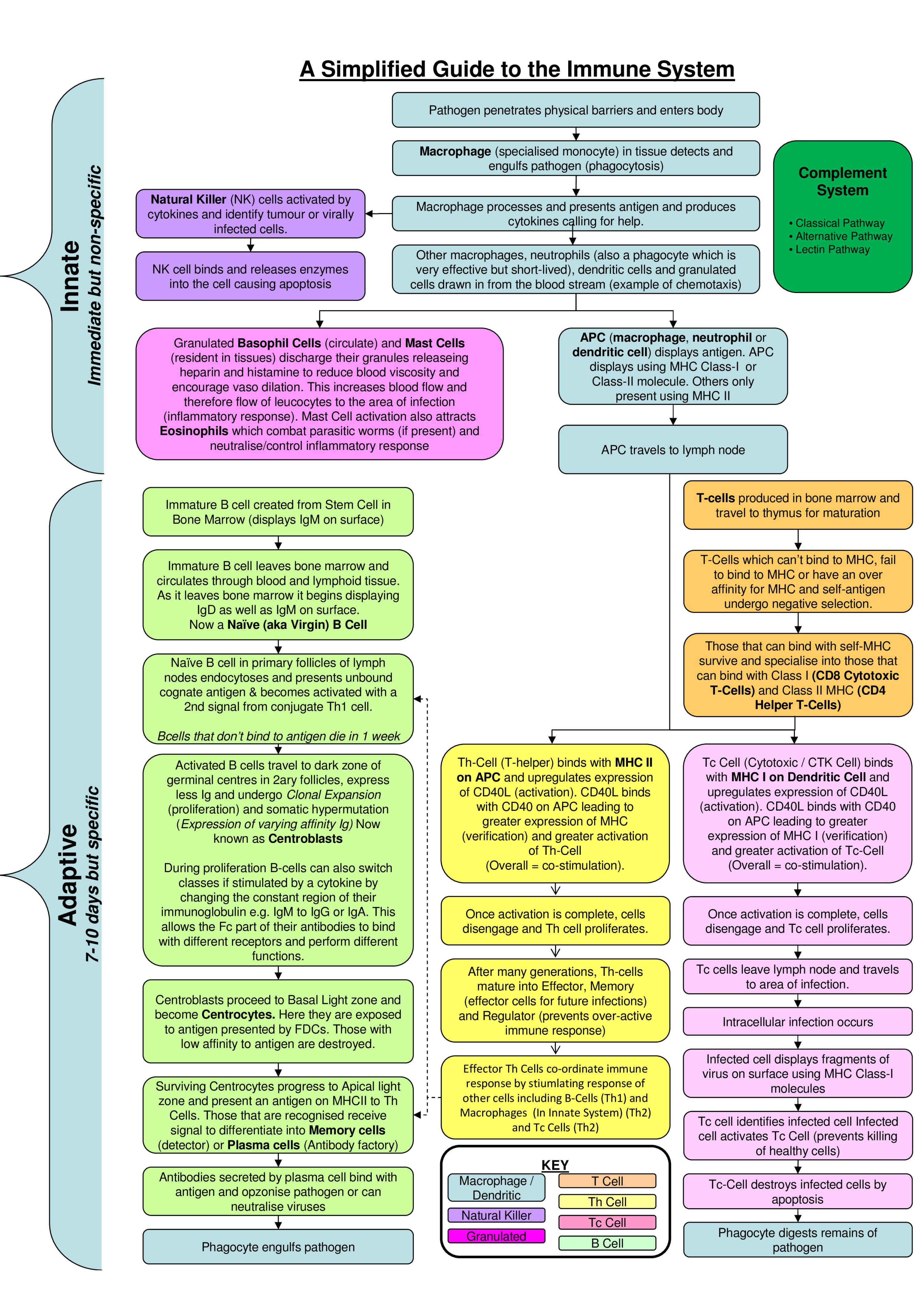 Immune System Flowchart   Nursing   Oncology nursing