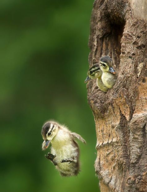 Image result for baby bird flying