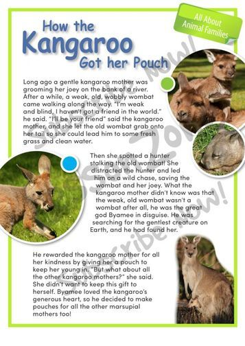 kangaroos essay View: evolutionary timeline of the kangaroos (tracing the tree-kangaroo line) there is one other species of tree-kangaroo in australia,.