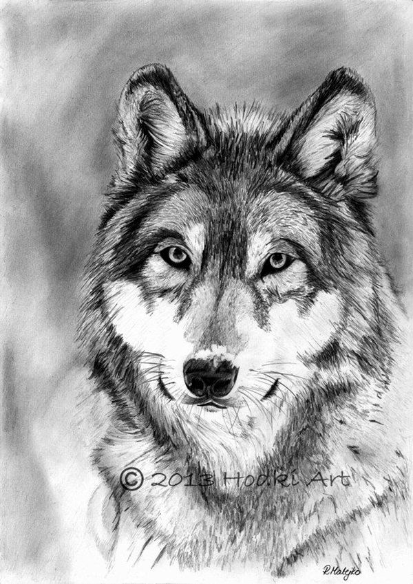 Realistic animal pencil drawings 26
