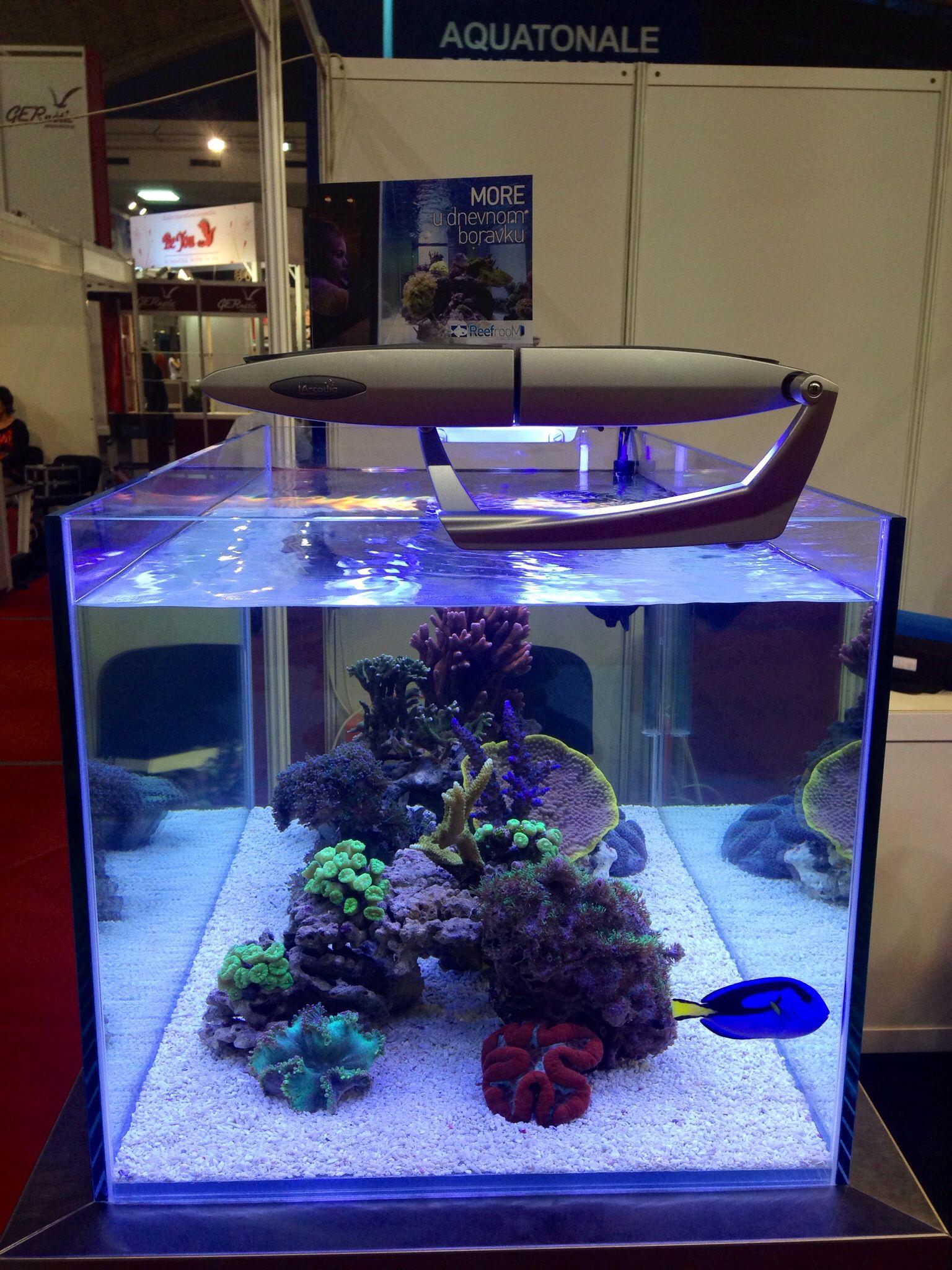 12gallon mrua tank rimless Aquascaping Aquarium
