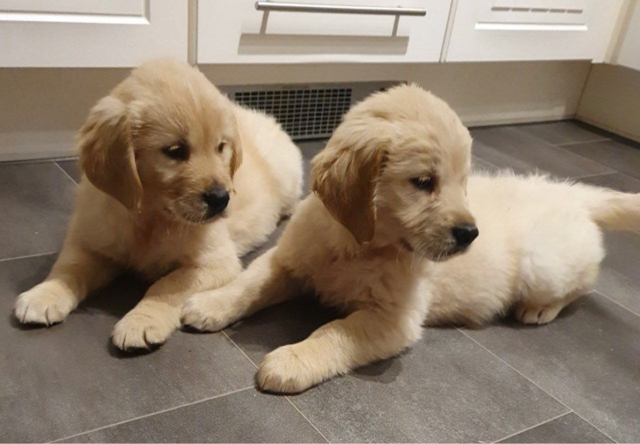 Wonderful No Cost Dogs And Puppies For Adoption Concepts Carry Out You Cherish Your Puppy Needless To Say Anyone Do Proper Pet Dog Attention Plus Coaching W