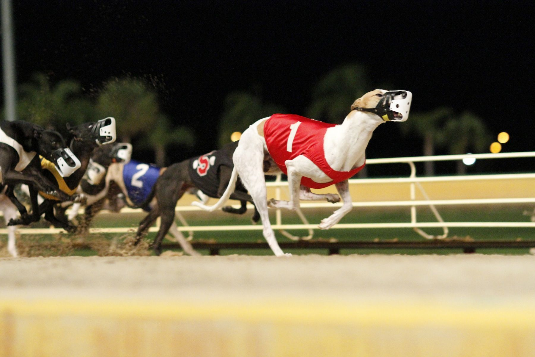 Casino Greyhound Track