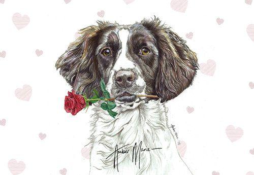 Pin By Cindy Wurtz On My Sprollier Cocker Spaniel Dog Springer Spaniel Spaniel