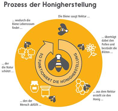 Wert der Biene - Honigherstellung #bastelprojektefürdenfrühling