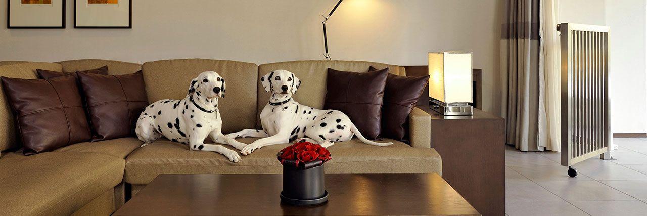 ホテル内のドッグ フレンドリールーム ペットと泊まれる客室 ハイアット リージェンシー 箱根 リゾート スパ Home Decor Hotel Decor