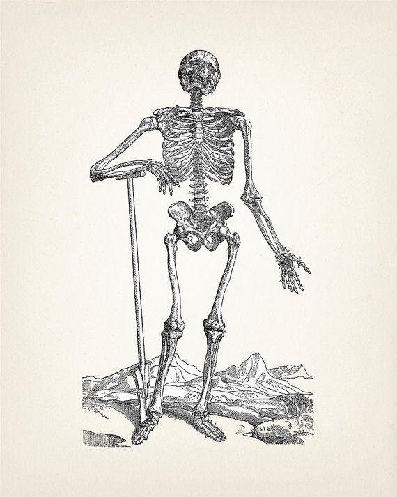 DINOSAUR SKELETON 1893 ORIGINAL ANTIQUE DICTIONARY BOOK PAGE WITH  ARTWORK