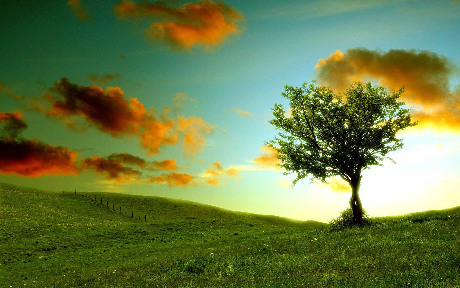 Plant a tree, that I can watch grow. | Bucket List | Pinterest | Buckets