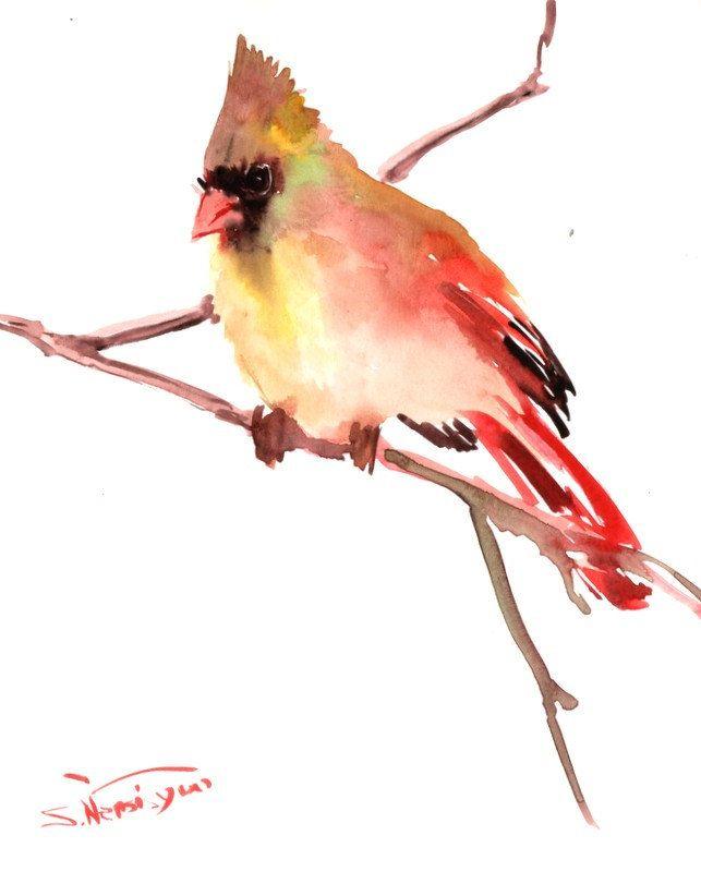 Watercolor Cardinal Tattoo: Female Northern Cardinal Original Watercolor By Suren