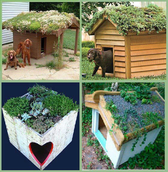 Decore seu jardim cool dog housespet also best house ideas images future diy for home rh pinterest