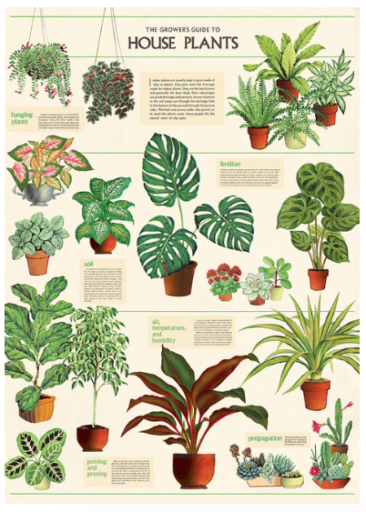 Vintage-Inspired Poster - House Plants
