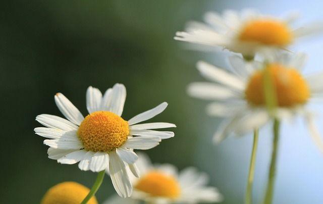 E' primavera, stagione della fioritura. Perché non approfittarne tra i fornelli?