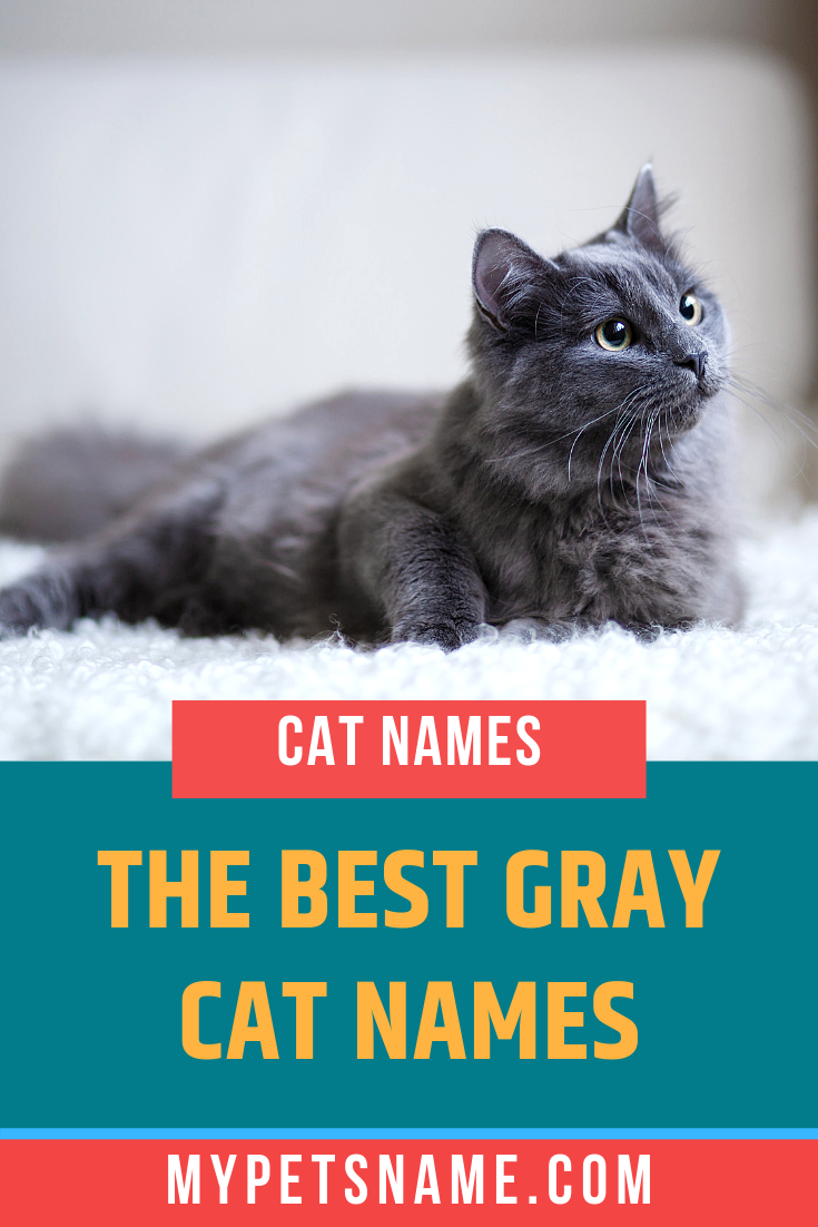 The Easiest Way To Come Up With The Best Gray Cat Names Is To