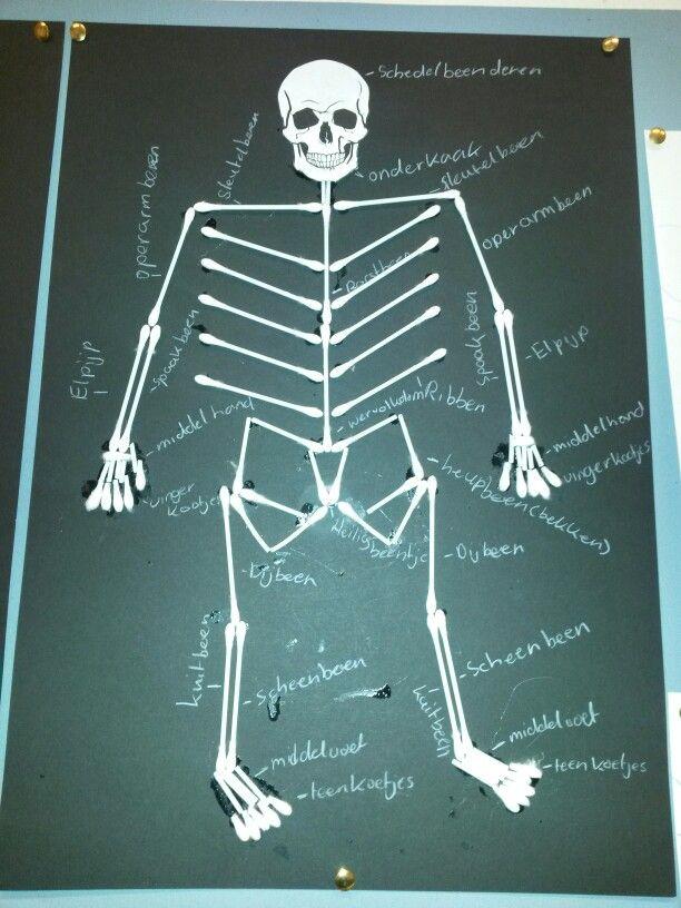 Skelet van wattenstaafjes | thema \'het lichaam\' | Pinterest