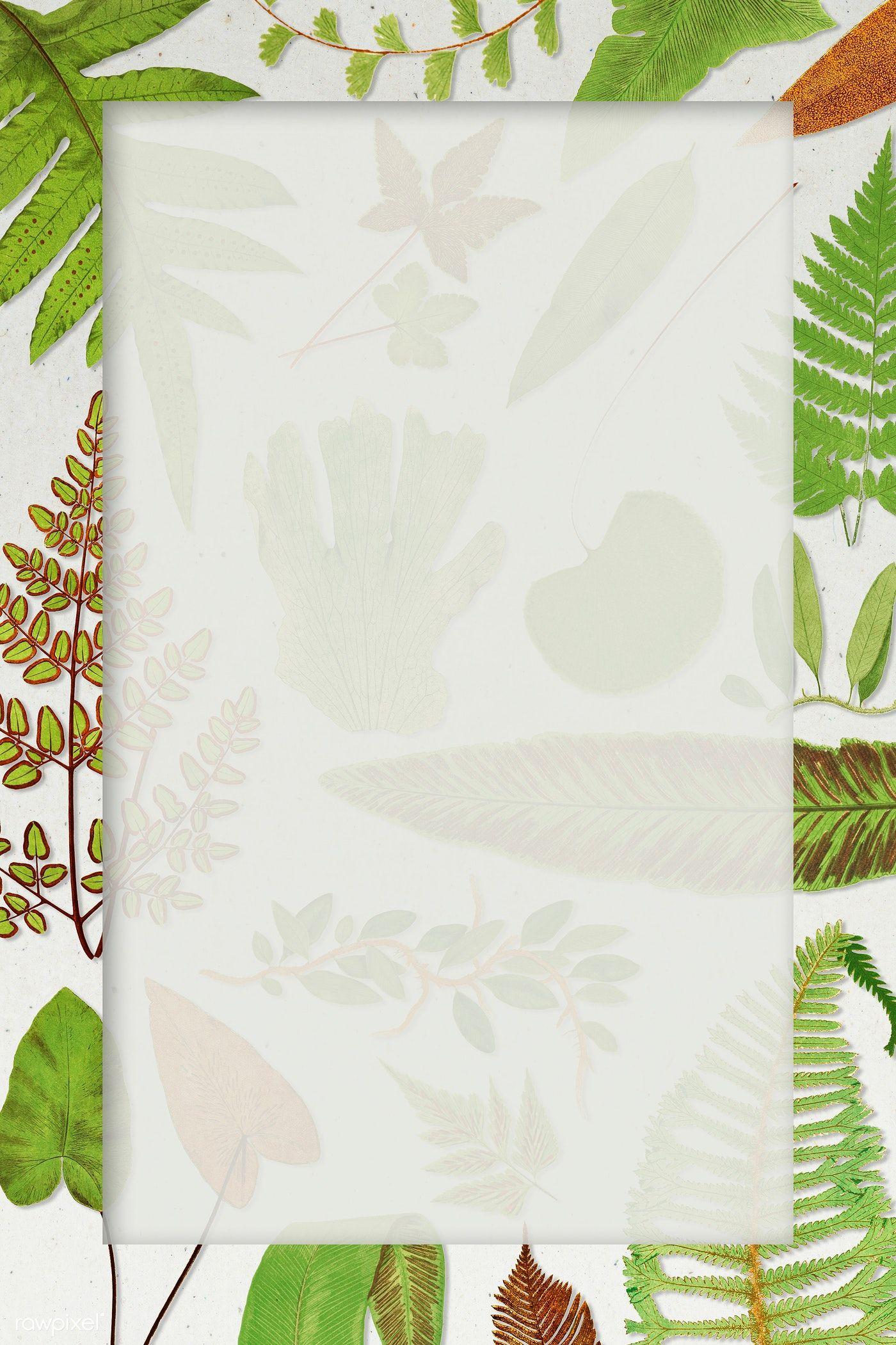 Download Premium Illustration Of Frame Of Fern Leaves Background 2251162 Leaf Background Flower Illustration Leaf Illustration