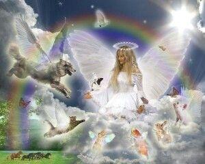 All Pets Go To Heaven Perros En El Cielo Amor De Perro Amo Los Animales