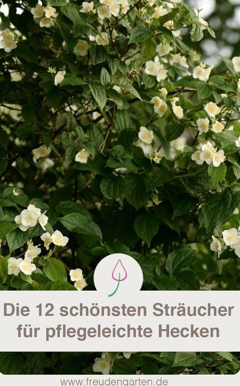 Die 12 schönsten Sträucher für eine pflegeleichte Hecke im Garten - gartenpflanzen winterhart immergrun