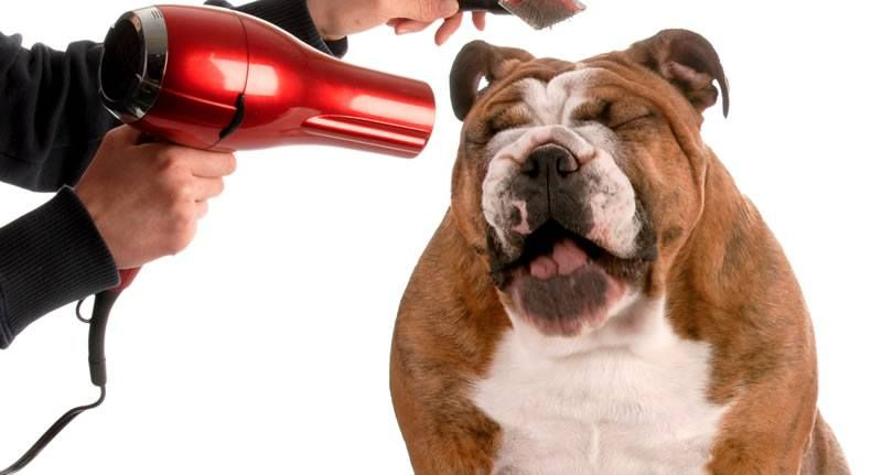 Best Cordless Dog Clippers For Professional DIY Grooming
